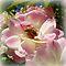 Bloom & Visitor - Enchanted Flowers*