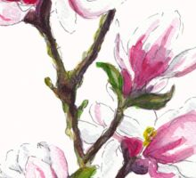 Magnolia blossoms Sticker