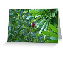 Rainforest Fruit Greeting Card
