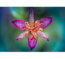 Ode to a toad (lily, silly!) Photographic Print