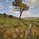 Lonesome Tree by eddiej
