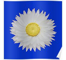 White Daisy with Yellow Center Poster