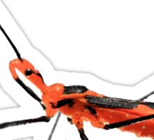 Walking Assassin Bug Wheel Bug With Dagger Macro Close-up Sticker