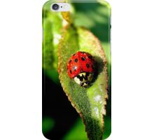 Little bitty lady bug  iPhone Case/Skin