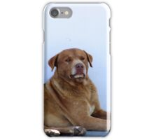 Brown Dog Lying on a Street iPhone Case/Skin