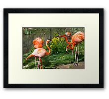 Flamingo Fight Framed Print
