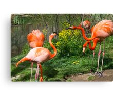 Flamingo Fight Canvas Print