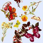 BUTTERFLIES by GloriaSanchez