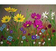 Spring Wild Flowers  Photographic Print