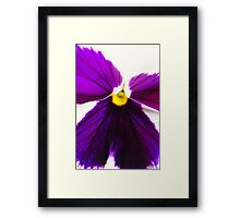 Purple and White Pansy Framed Print