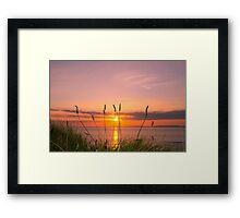 wild tall grass sunset Framed Print