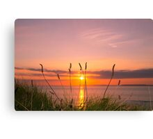 wild tall grass sunset Canvas Print