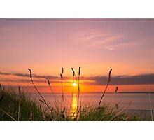 wild tall grass sunset Photographic Print