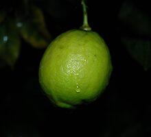 Unripe lemon after rain by Cameron Hicks