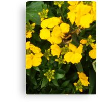 Bumble Bee In Yellow Flowers Canvas Print