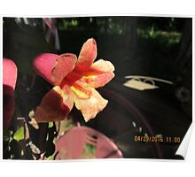 Yellow/red flower Poster