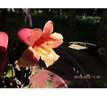 Yellow/red flower Photographic Print