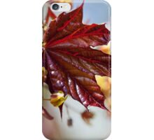 Young maple leaf iPhone Case/Skin