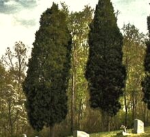 """"""" 'THE CEMETERY' """", a Series,  #14, A Countryside Cemetery """"  Sticker"""