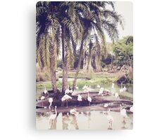 Flamingo Island Canvas Print