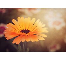 Textured Marigold Photographic Print