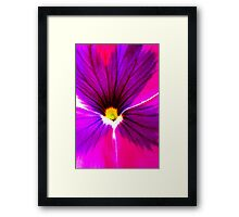 Hot Pink and Purple Pansy Framed Print