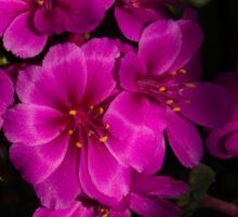 Shocking Pink and Fuchsia - a Vivid Succulent Bouquet Sticker