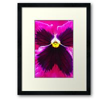 Hot Pink and Black Pansy Framed Print