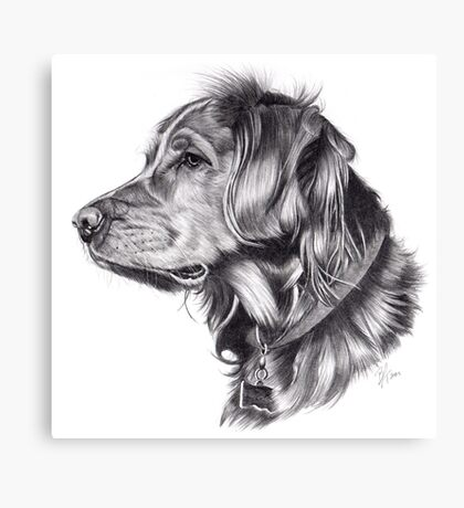 Retriever Canvas Print