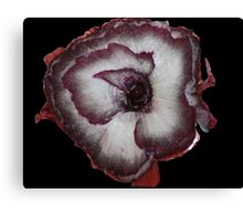 Red Onion DPG160429a Canvas Print