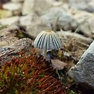 Tiny Toadstool by Susan S. Kline