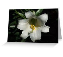 Emerging from the Darkness - Pure White Easter Lily Greeting Card