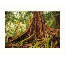 Majestic Forest Tree Trunk Art Print