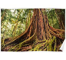 Majestic Forest Tree Trunk Poster