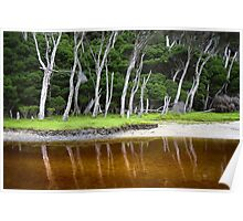 Tree reflection - Tidal River Poster