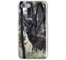 Kangaroo on Mt. Lofty, Adelaide  iPhone Case/Skin