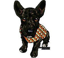 Adopt a Dog Photographic Print