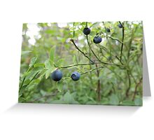 BlueBerry Love Greeting Card