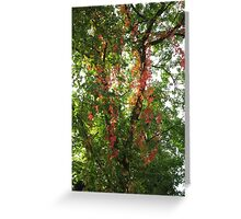 Wild Vines Greeting Card