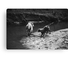 2 dogs playing Canvas Print