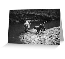 2 dogs playing Greeting Card