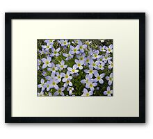 Bluets Framed Print