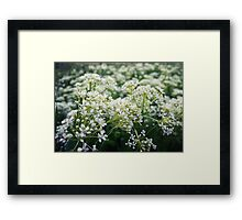 White meadow 2 Framed Print