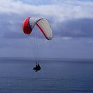 My Grandson Paragliding ~ La Jolla, California ~ USA by Marie Sharp
