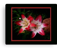 Bright red and white petals Canvas Print