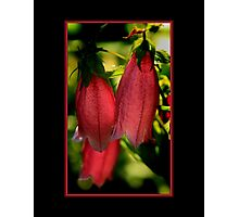 Bright red blooming flower  Photographic Print