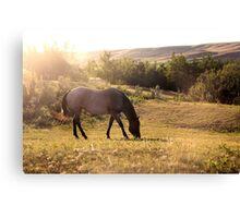Summertime Pasture Canvas Print
