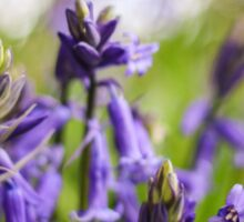 Bluebell Flower Sticker
