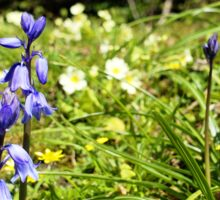 Two bluebells surrounded by yellow and white wild flowers and grass Sticker