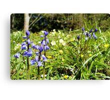 Two bluebells surrounded by yellow and white wild flowers and grass Canvas Print